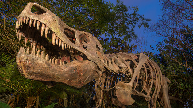 This is a replica of the most complete T-Rex skeleton ever unearthed and it can be found at Animal Kingdom. Do you know its name?