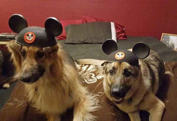 Five Most Memorable Official Disney Tweets - February 18, 2016 - #ShareYourEars Edition