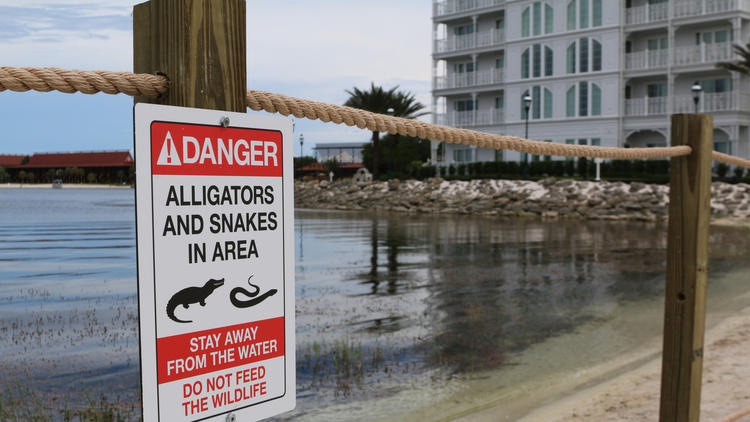 Reedy Creek Firefighters Had Been Warned to Stop Feeding Alligators Prior to Attack