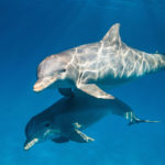 Dolphins to be 2018 Disneynature Movie, Trailer Released