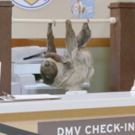 """Zootopia IRL"" Puts Sloths to Work at a DMV"