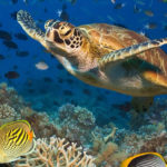 Save Up to $300 Per Person On Select 2019 Adventures by Disney Vacations
