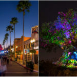 Disney After Hours Events Expanding to Disney's Hollywood Studios and Disney's Animal Kingdom