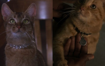 """Fan Theory: """"Captain Marvel"""" Takes Place in the Same Universe as """"The Cat From Outer Space"""""""