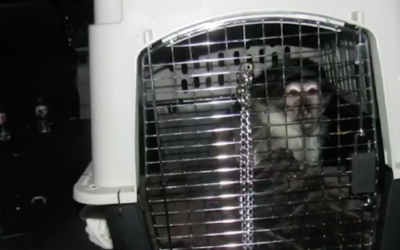 Monkeys Found in Van Parked at Walt Disney World's Grand Floridian Resort