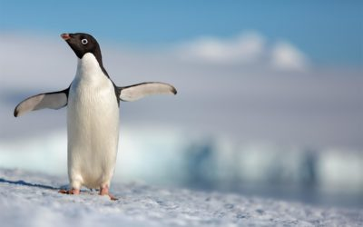 "Disneynature's ""Penguins"" Coming to El Capitan for Special Five-Day Engagement"