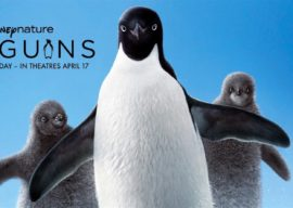 """Film Review: Disneynature's """"Penguins"""" is a Beautiful, Fun, Informative Documentary for Beginners"""