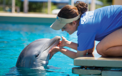 SeaWorld Orlando Announces May Inside Look Locations and Presentations
