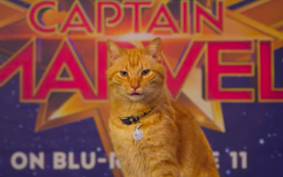 "Goose the Cat from ""Captain Marvel"" Answers Questions in New ""Ask Marvel"" Video"