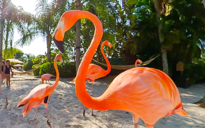 Discovery Cove at SeaWorld Orlando Welcomes New Flamboyance of Flamingos