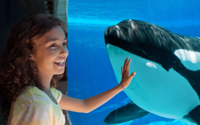 SeaWorld Orlando Offers Free Admission to Those Affected By Thomas Cook Closure