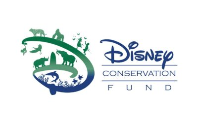Disney Conservation announces $6 million in grants