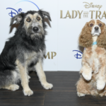 "Live-Action ""Lady and the Tramp"" Screens in New York Ahead of Disney+ Premiere"
