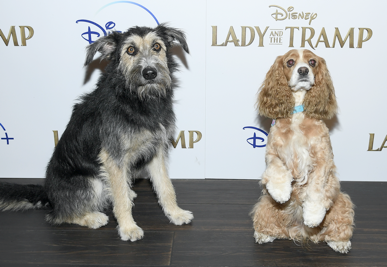 Live Action Lady And The Tramp Screens In New York Ahead Of Disney Premiere Laughingplace Com