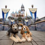 """""""Lady and the Tramp"""" Stars Celebrate Disney+ Film Release With A Trip to Disneyland"""