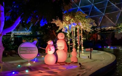 Video - Living with the Land: Merry and Bright Nights