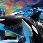 "SeaWorld Orlando to Replace ""One Ocean"" Orca Show with ""Orca Encounter"" on January 1"