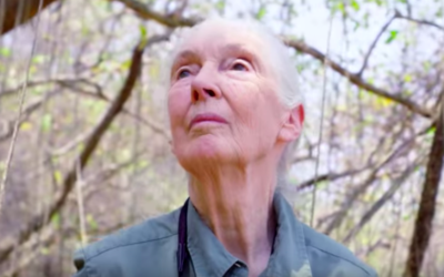 """National Geographic Released Trailer for """"Jane Goodall: The Hope"""" Documentary"""