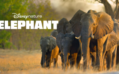 "Movie Review: Disneynature ""Elephant"""