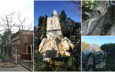 The Trees of Disneyland: The History and Storytelling of the Park's Horticulture