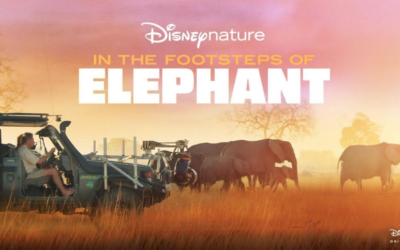 Movie Review: Disneynature 'In the Footsteps of Elephantt""