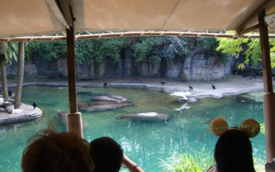Moment of Disney Bliss: Kilimanjaro Safaris