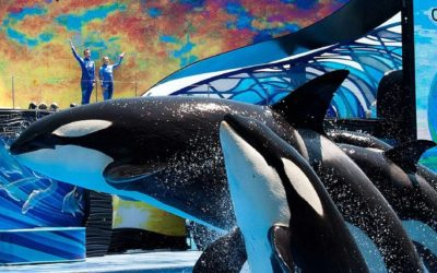 SeaWorld Looking for Federal Assistance Following Furloughs