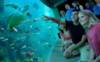 SeaWorld Orlando Extends and Upgrades Existing Annual Passholders