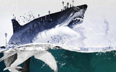SharkFest Returns to National Geographic, Nat Geo WILD Starting July 19