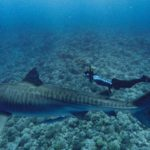 "SharkFest Review: ""World's Biggest Tiger Shark?"" (Nat Geo)"