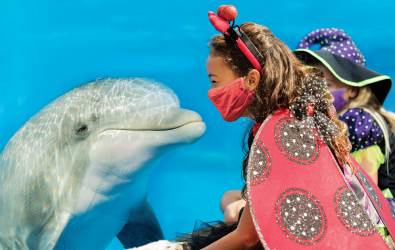 Busch Gardens Tampa Bay and Seaworld Orlando Sells 2021 Fun Card Which Also Gives Admission for Remainder of 2020 for Free