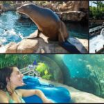 SeaWorld and Aquatica Orlando Now Open Seven Days a Week Through October 5th