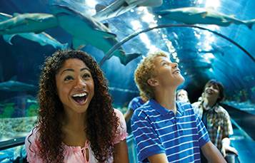 SeaWorld Orlando Celebrates Sharks Now Through August 16th