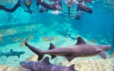 Discovery Cove Reopens Shark Swim Program With Limited Capacity