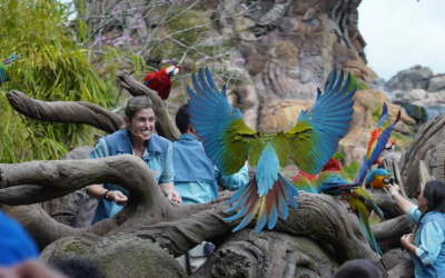 "TV Review: ""Magic of Disney's Animal Kingdom"" (Disney+)"