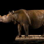 "National Geographic Celebrates World Rhino Day with Announcement of ""Photo Ark""  on Nat Geo WILD"