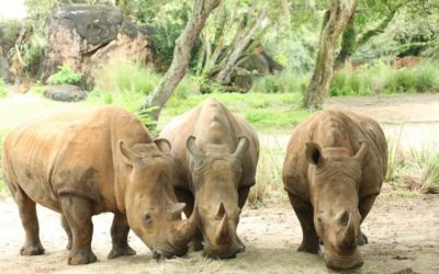 Animal Kingdom Celebrates World Rhino Day with Exciting News Announcement