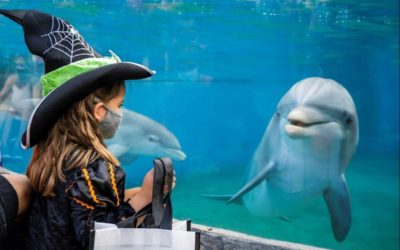 SeaWorld's Spooktacular Returns to San Diego Park October 2 with New and Favorite Experiences