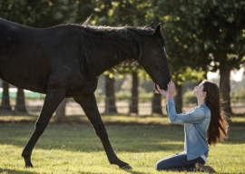 """Film Review: """"Black Beauty"""" is a Heartwarming Disney+ Film for the Whole Family"""