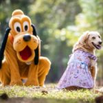 'Paws' Everything! New Disney Parks Reigning Cats and Dogs Collection Lands on shopDisney