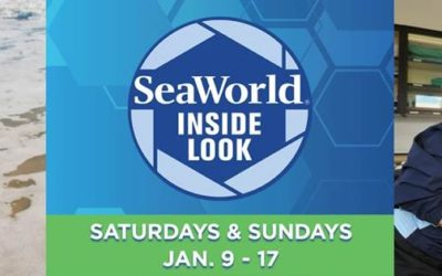 SeaWorld Orlando Offering Inside Look Program on Select Weekends This Month